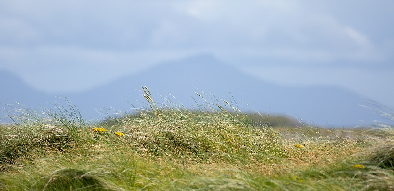 Machair in the Outer Hebrides