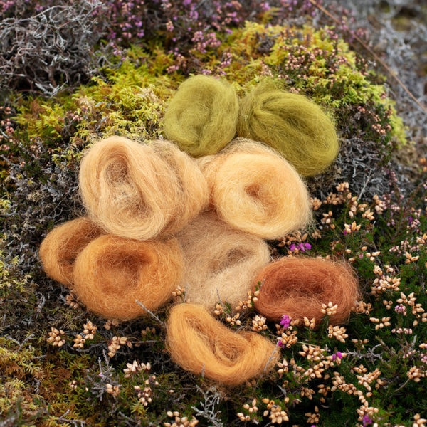Natural dye experimentation by Alice Starmore using plants and lichens from the Outer Hebrides
