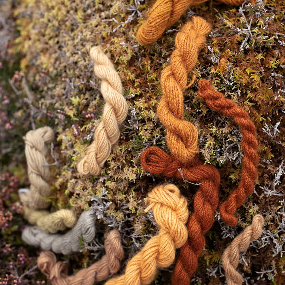 Natural dye experimentation by Alice Starmore using plants and lichens of the Outer Hebrides