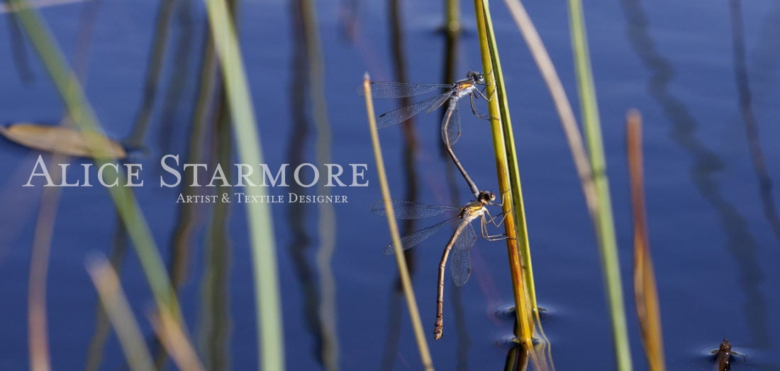 Dragon and Damselflies in the Outer Hebrides